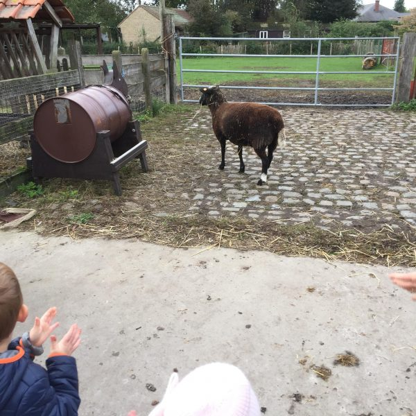 Kikkerklas: naar de kinderboerderij.