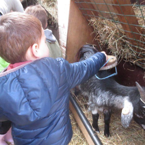 Met de bijtjesklas naar de kinderboerderij