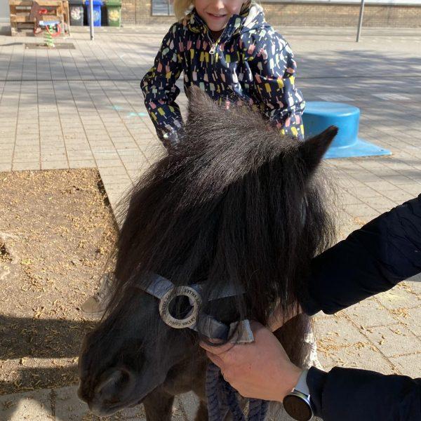 thema paarden