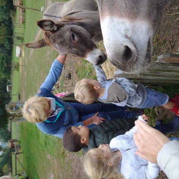 Sprinkhaanklas: Naar de kinderboerderij...